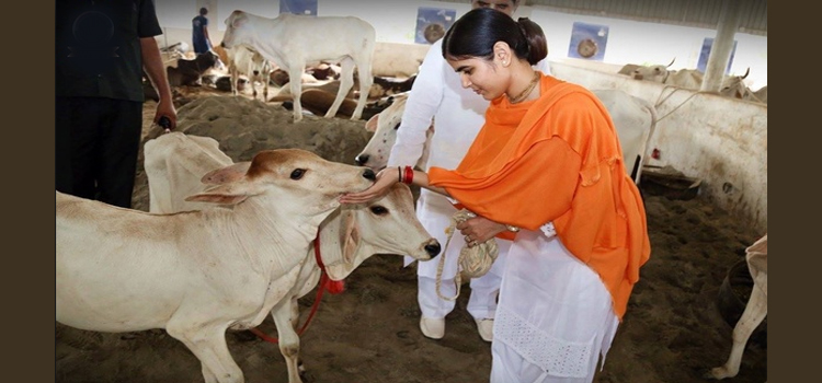 Murdering Cows Vs Serving Cows as told by Sikh Gurus