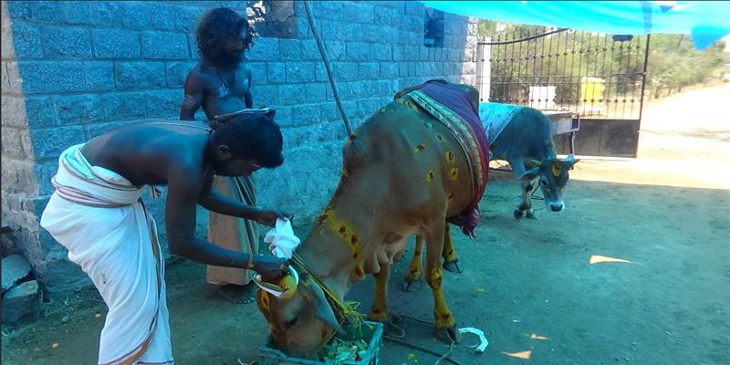 Gho pooja – Ashwa Pooja – Nandhi (Rishaba Raja) Pooja – Thiruvannamalai Ghosala (Cowshed)
