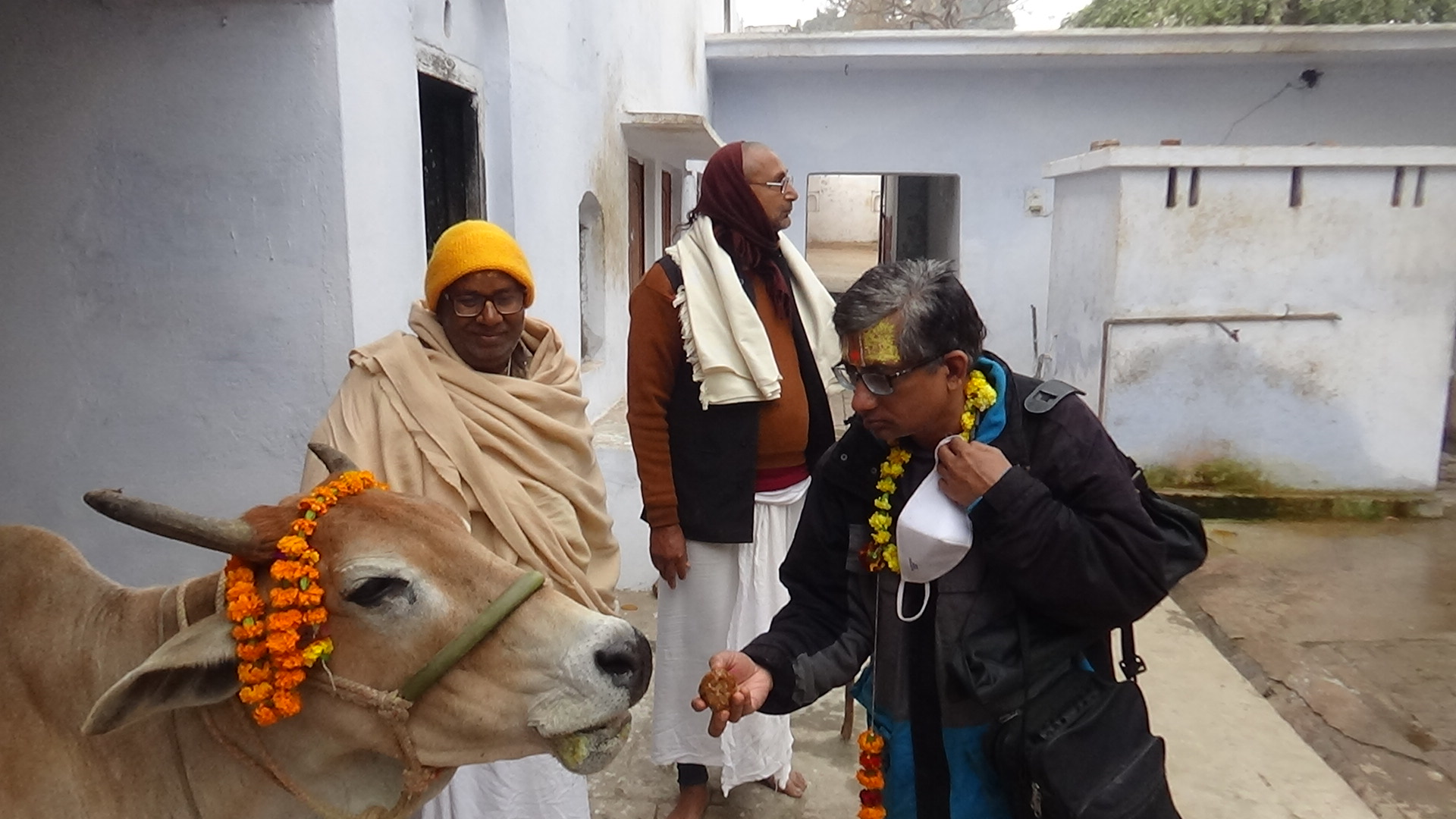 Holy Ram Bhakth Cow – Dharshan and Blessings !!